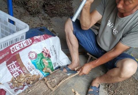 郑州女白领辞职回农村,带领村民卖野生草药,让村里人收入翻番